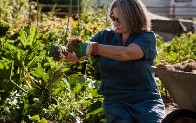How to make my allotment more resilient