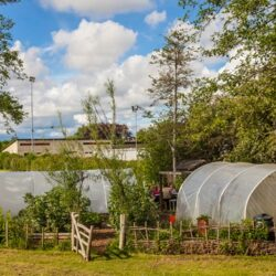 Open Veg and Fruit Gardens    Wednesday May 19 2021, 2-5pm