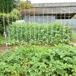 Enter the Melplash Agricultural Society's Garden and Allotment competition