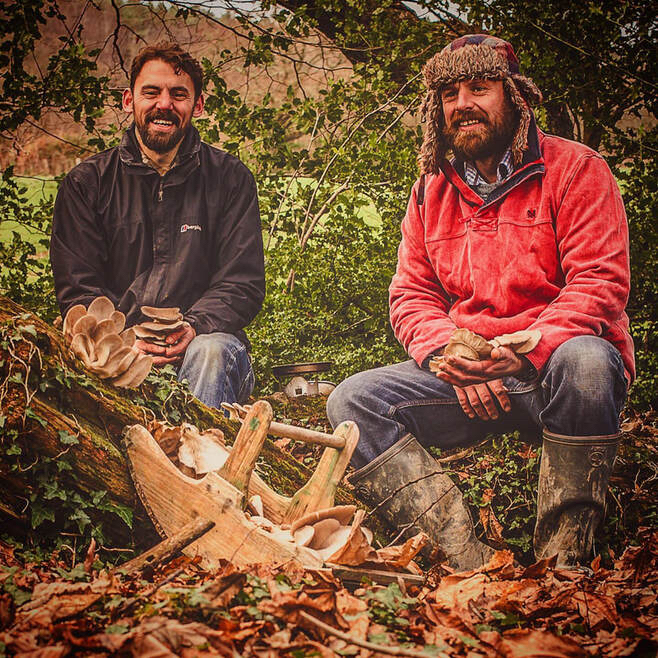 Meet the producer: Nick Phillips, Chris Gasson tell us about Chideock Champignons, their gourmet mushroom farm in Chideock: