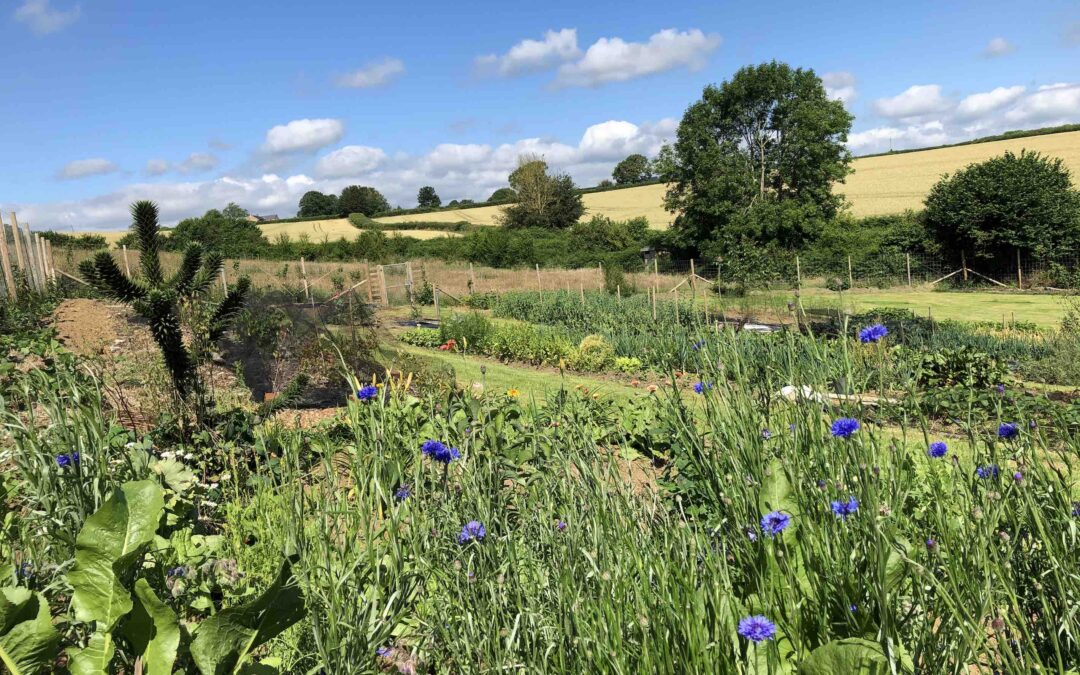 Vital Roots Garden courses: Bountiful Seed Saving on Saturday 31 July; and Pickle the Garden, Sunday 1 August.